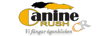 canine-rush